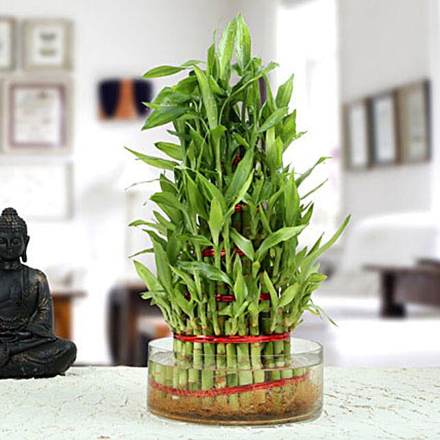 Ravishing 5 Layer Lucky Bamboo Plant: Feng Shui Gifts