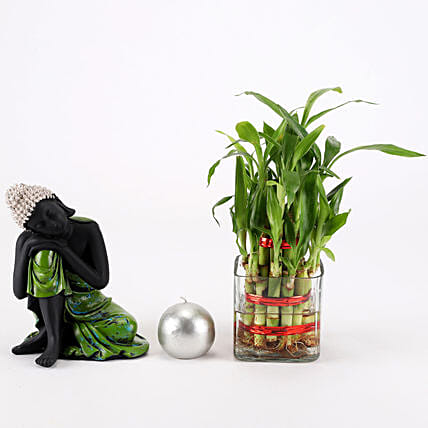 Relaxing Buddha & Bamboo Plant Combo: Indoor Plants