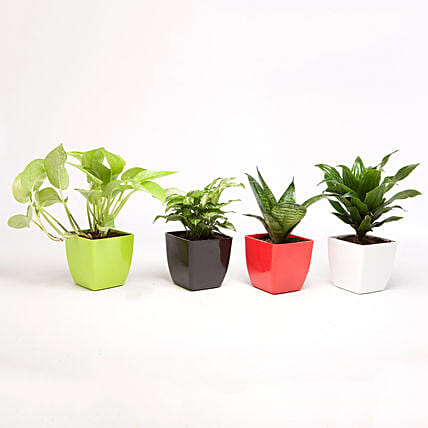 Set of 4 Green Plants in Beautiful Plastic Pots: Cactus and Succulents Plants