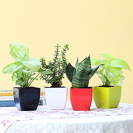 Foliage & Air Purifying Plant Set: Good Luck Plants - Friendship Day