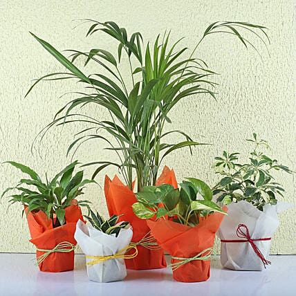 Set of 5 Exotic Green Plants: