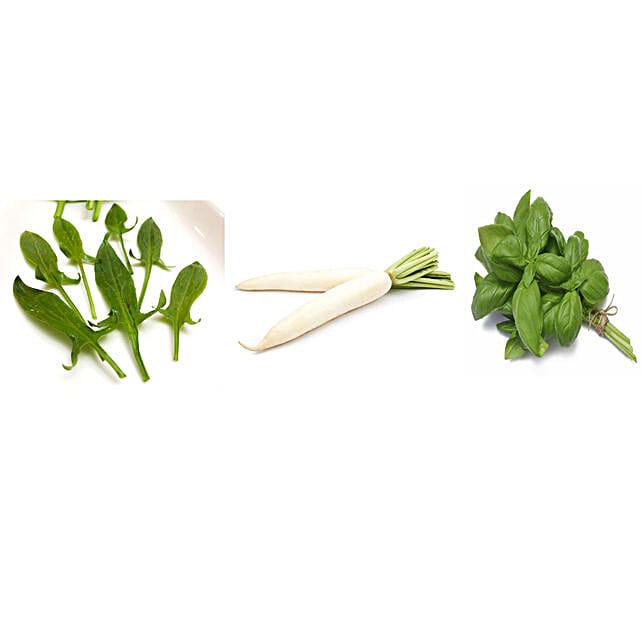Sorrel Radish & Basil Seeds Combo: Herbs Seeds