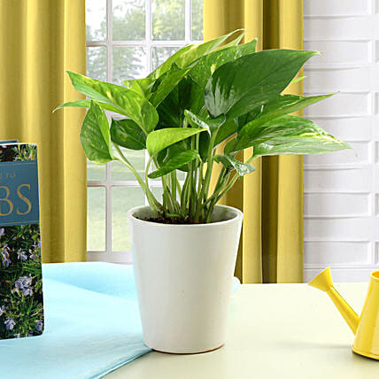 Striking Money Plant: Potted Plants