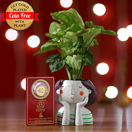 Syngonium Plant & 24 Carat Coin Free: Ornamental Plant Gifts