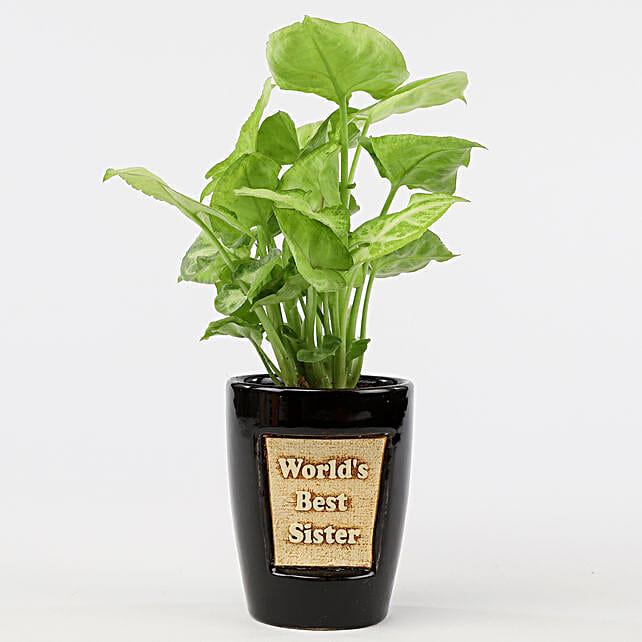 Syngonium Plant In World's Best Sister 3D Pot: Raksha Bandhan Plants