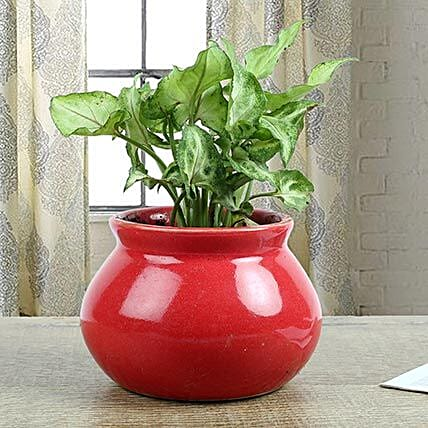 Syngonium Plant With Red Vase: Succulents and Cactus Plants