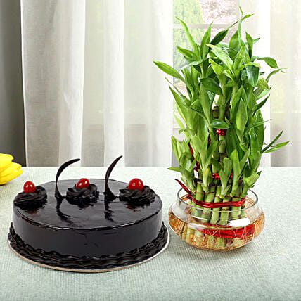Truffle Cake N Three Layer Bamboo Plant: Good Luck Plants - Friendship Day