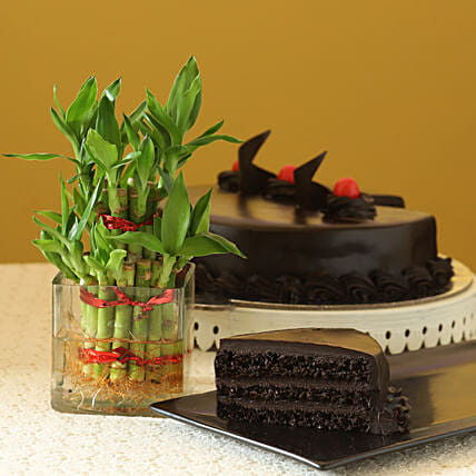 Truffle Cake N Two Layer Bamboo Plant: Good Luck Plants - Friendship Day