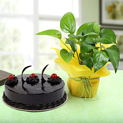 Truffle Cake With Money Plant: