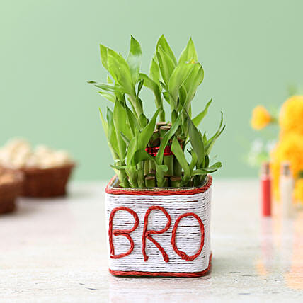 Two Layer Bamboo Plant For Bro: Bamboo Plants