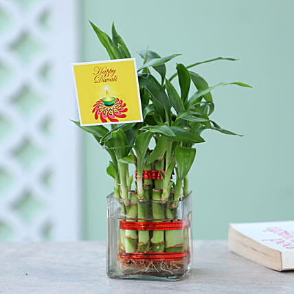 Two Layer Bamboo Plant For Diwali: Buy Indoor Plants
