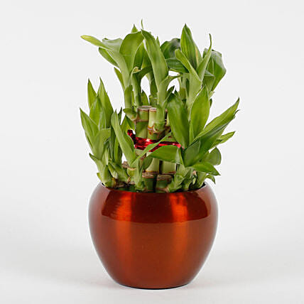 Two Layer Bamboo Plant in Brass Orchid Metal Pot: Lucky Bamboo Plants