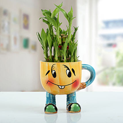 Two Layer Bamboo Plant With Smiley Vase: Rare Plant Gifts