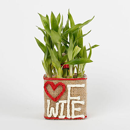 Two Layer Lucky Bamboo For Wife: Indoor Plants