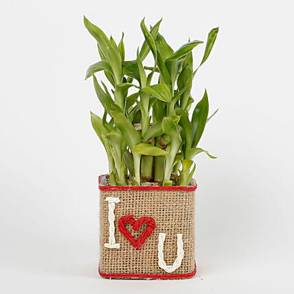 Two Layer Lucky Bamboo in a Glass Vase I Love You: Hug Day Gifts