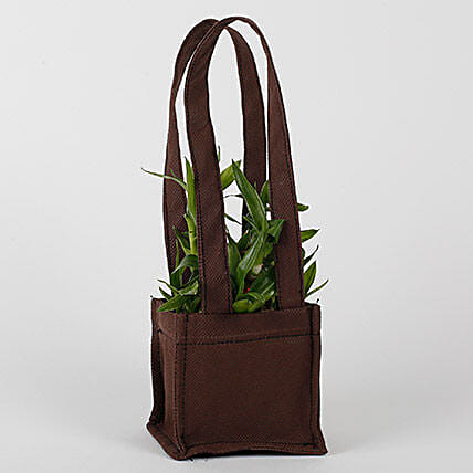 Two Layered Bamboo in Coffee Brown Bag: Bamboo Plants