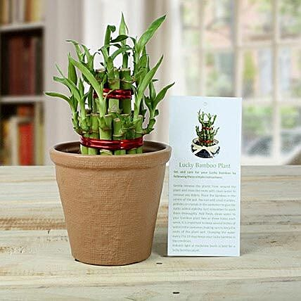 2 Layers Luck Bamboo Plant: Send Lucky Bamboo to Gurgaon