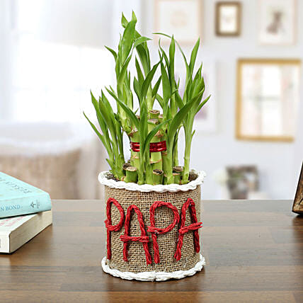 Lucky Bamboo Plant For Papa: Birthday Gifts for Dad