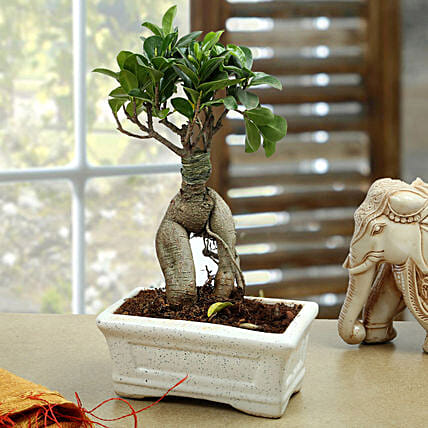 Marvellous Bonsai Plant: Send Home Decor to Bengaluru