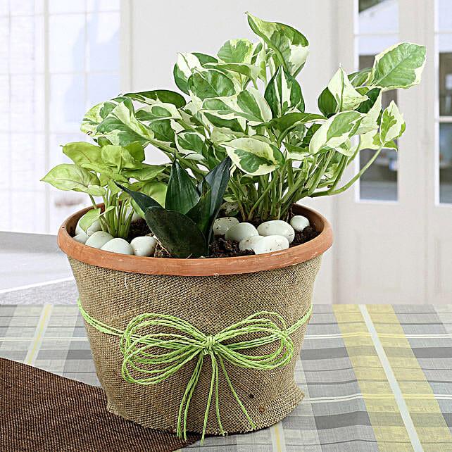 Air Purifying Dish Garden: