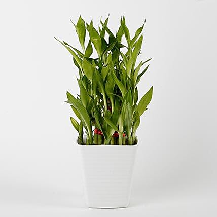 3 Layer Bamboo Plant in Striped Imported Plastic Pot: Send Spiritual Gifts for Bhai Dooj