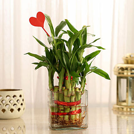Two Layer Lucky Bamboo With Heart Shaped Tag: Send Plants for Valentines Day