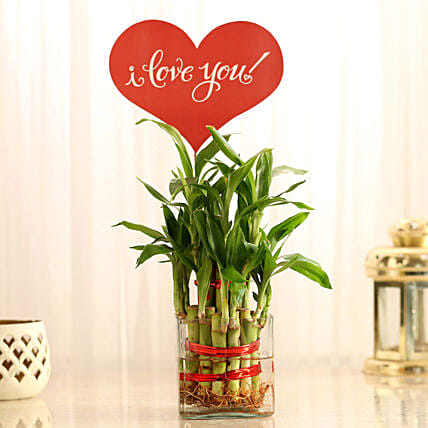 Two Layer Lucky Bamboo With I Love You Tag: Valentine Plants