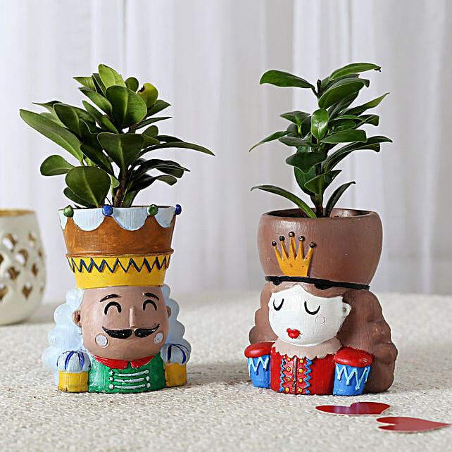 Set of 2 Ficus Compacta In King Queen Pots: Home Decor