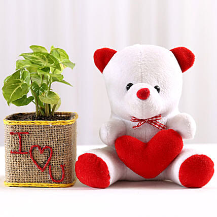 Syngonium Plant in I Love You Vase & Teddy Bear: Send Soft Toys