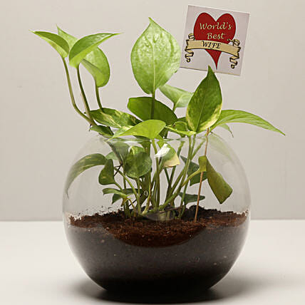 Money Plant For Best Wife: Send Plants for Anniversary