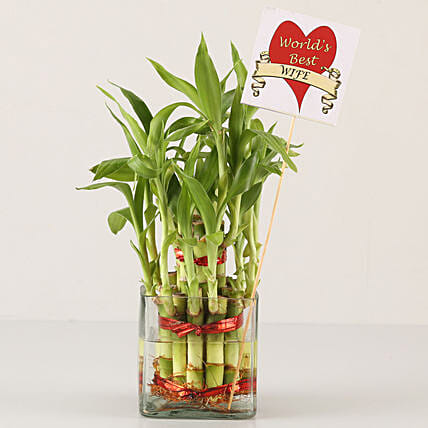 2 Layer Bamboo Plant For Best Wife: