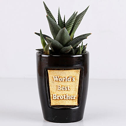Haworthia Plant For Best Brother: Rare Plant Gifts