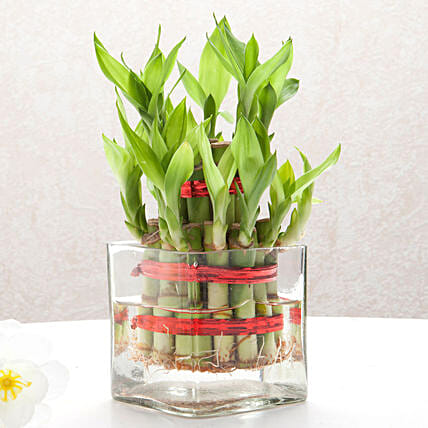 Bringing Good Luck 2 Layer Bamboo: Gifts for Parents