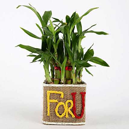Valentine Special 2 Layer Lucky Bamboo In For U Vase: Indoor Plants