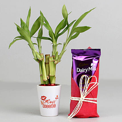 Bamboo Plant In Hugs & Kisses Pot & Dairy Milk Silk: Office Desk Plants