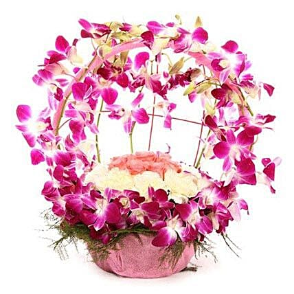 Vibrant Orchid Celebration: Unique Gifts