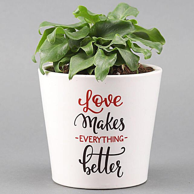 Xanadu Plant In Love Special Ceramic Pot: Send Plants for Valentines Day
