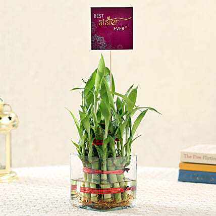 Plant with Best Sister Tag Online