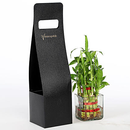 online bamboo plant for home décor
