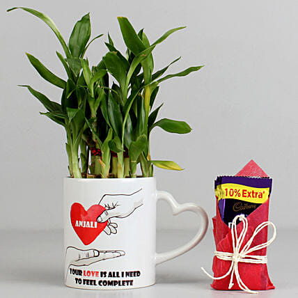 Bamboo Plant And Chocolate Combo