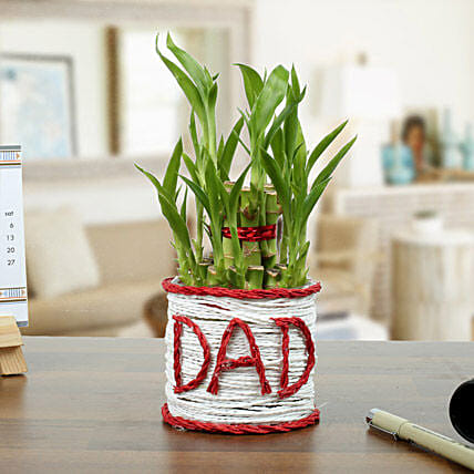 2 Layer Lucky Bamboo Plant for Dad
