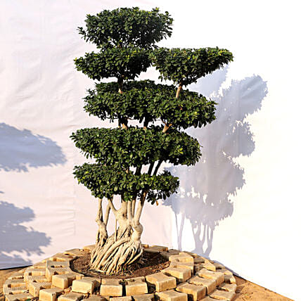 Bonsai Plant For Garden