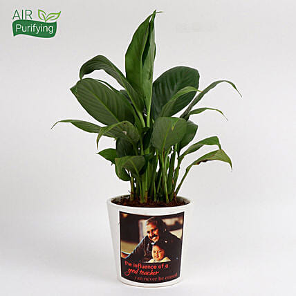 peace lily plant with photo vase