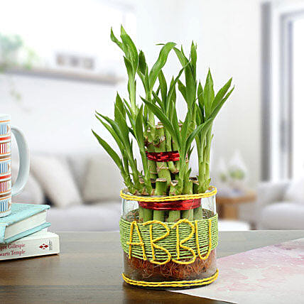 Lucky Bamboo Plant Gift for Dad