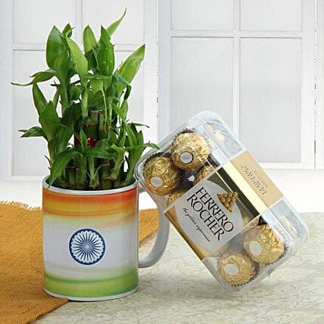 Lucky bamboo with mug and chocolate