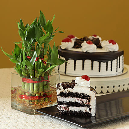 Blackforest cake with 2 Layer Bamboo
