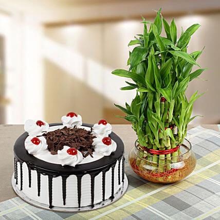 3 Layer Bamboo with Blackforest cake