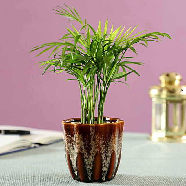 palm plant in brown ceramic pot online