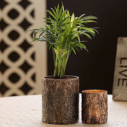 Plant with Gold Finish Pot with Votive Holder Online