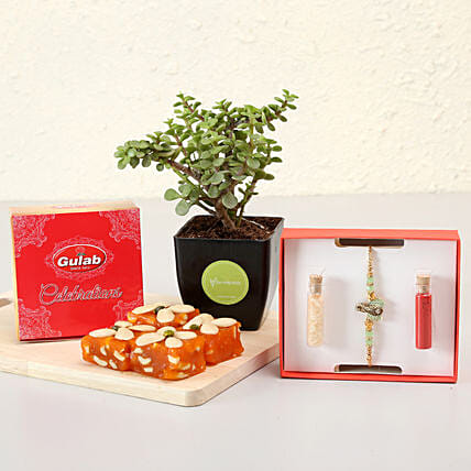 rakhi with plant combo online